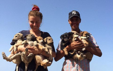 Neutering morocco animal aid