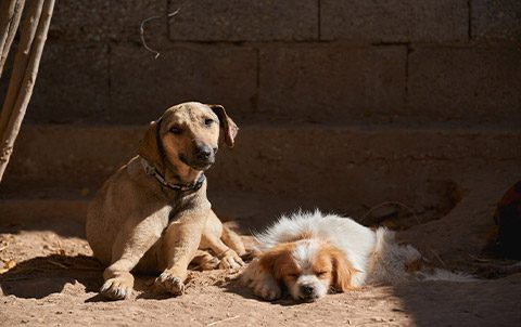 Fostering morocco animal aid